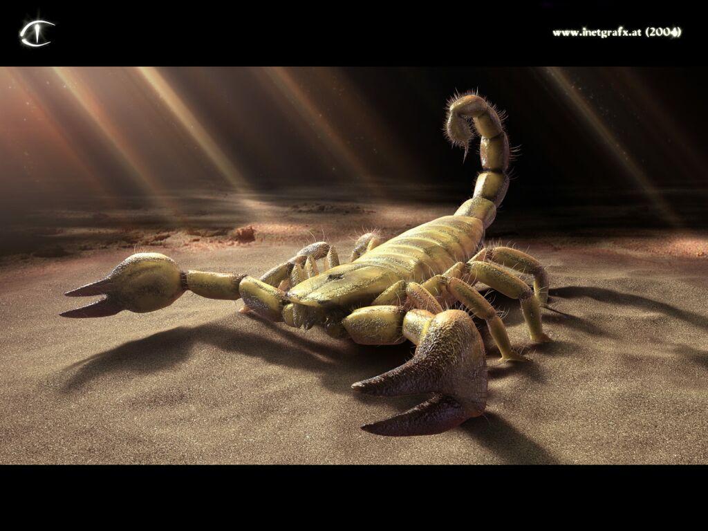 Scorpion 3D-graphics desktop wallpapers Download