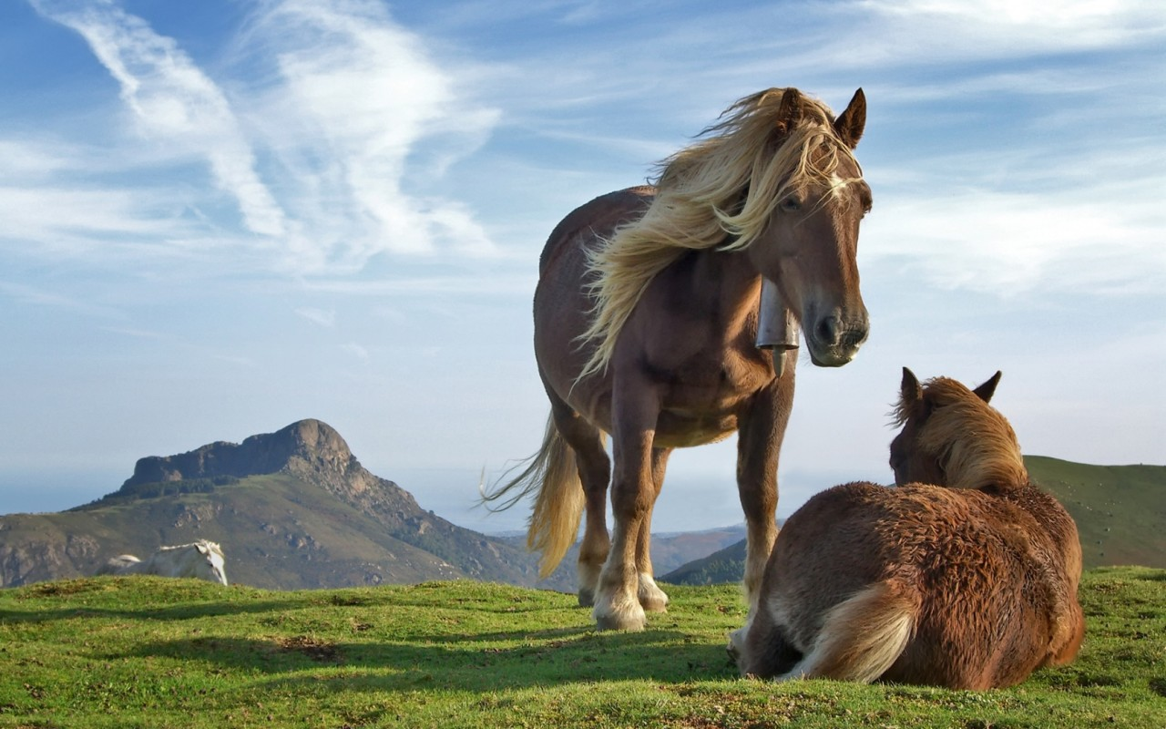 Horse desktop wallpapers Download