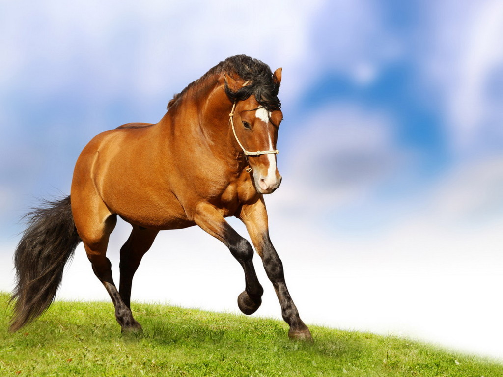 Horse natural grace desktop wallpapers Download