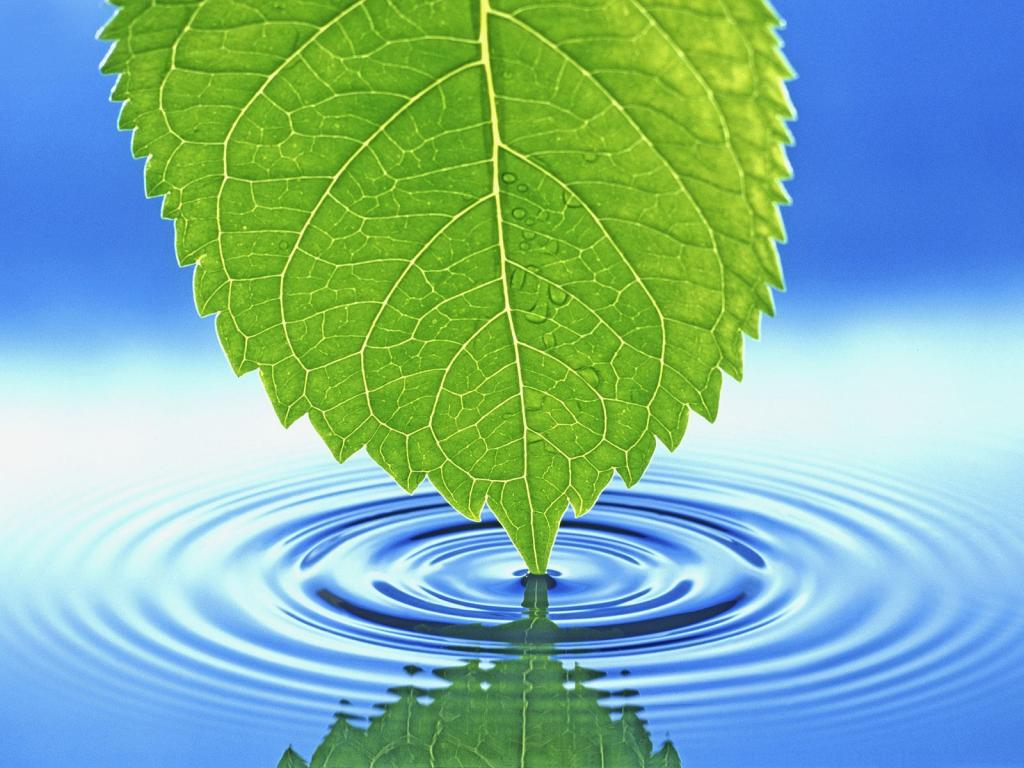 Leaf producing ripples wallpaper Download
