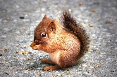 animals cute baby animal squirrel wild cuddly adorable amazing eating pacifyer domestic nut nature chameleon scythemantis dangerous metamorphozis sortrature children